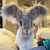 Venez rencontrer Wally, le petit lapin aux très grandes oreilles !