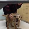 Un chien aveugle voit sa famille pour la première fois !