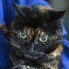 Le plus vieux chat du monde est mort.