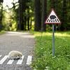 Des petits panneaux de signalisation pour de petits animaux