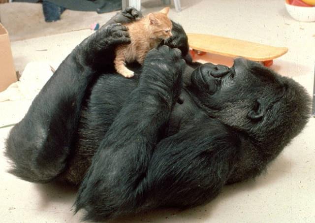 black tabby kitten