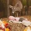 Une biche s'invite dans une séance photo avec un nouveau-né !
